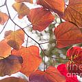 Leaf N Leaves Collection