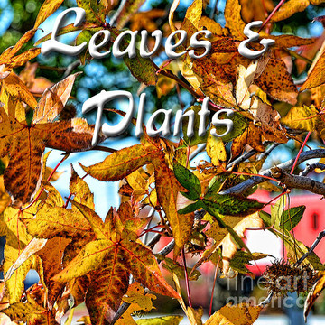Leaves and Plants Collection