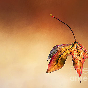 Leaves of various kinds Collection