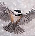 Leda - Backyard Bird Obsession