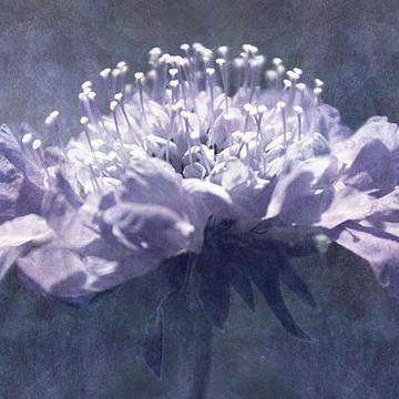 Leda Renderings - Flora Collection