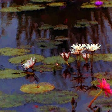 Lily Pond Pictures Collection