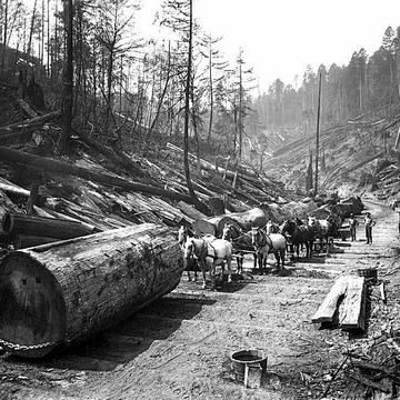 Logging & Timber Industry Collection