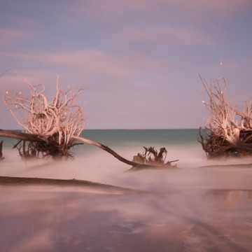 Longboat Key Roots Square Collection