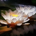 Lotus Flower Art Prints Collection