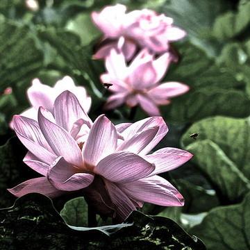 Lotus Life Collection