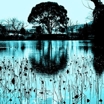 Lotus Pond Winter Collection