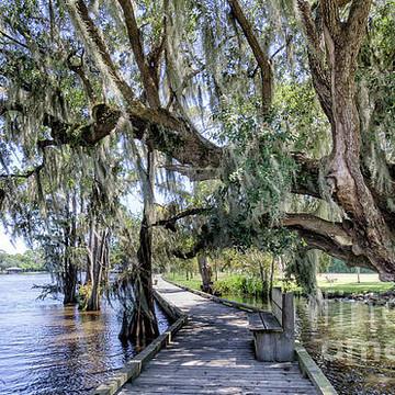 Louisiana- other than NOLA Collection
