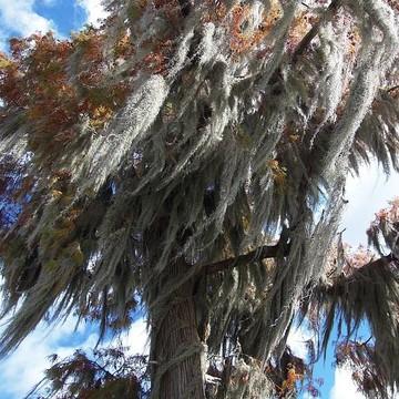 Louisiana Swamp Tour 2014  Collection