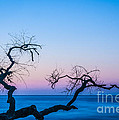 Low Country South Carolina Collection