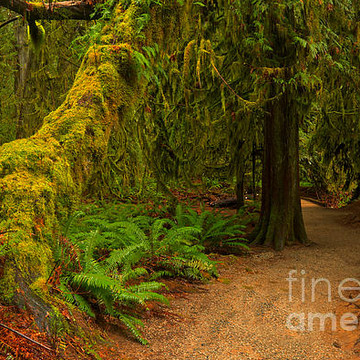 MacMillan Provincial Park - Vancouver Island - British Columbia - Canada Collection