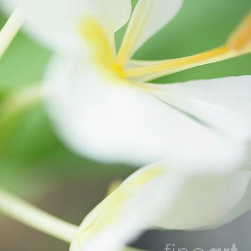 Macro Botanicals