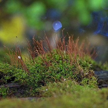 Macro- Close Ups of Moss Collection