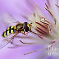 Macro Nature Photography Collection