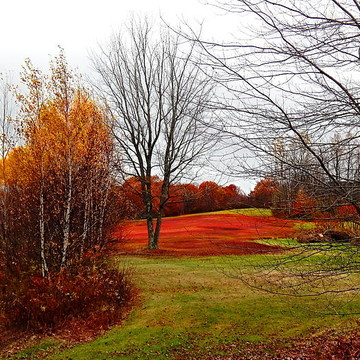 Maine scenery