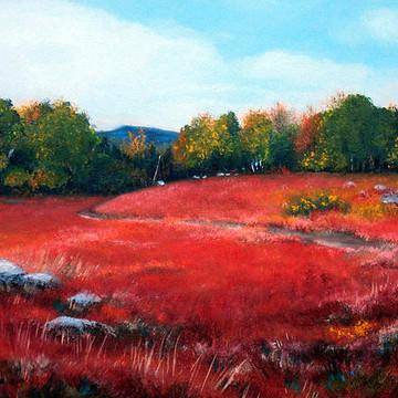 Maine Wild Blueberry Fields Collection