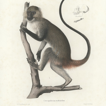 Mammal Illustrations Collection