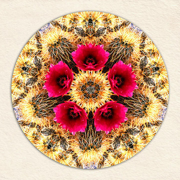 Mandalas from Photos Collection