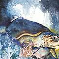 Marine animal life Collection