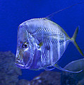 Maritime and Underwater Images-Stock Collection