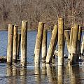 Marsh Creek State Park Collection