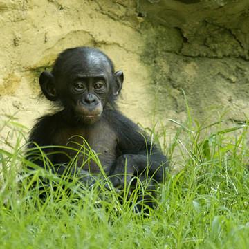 Memphis Zoo Collection