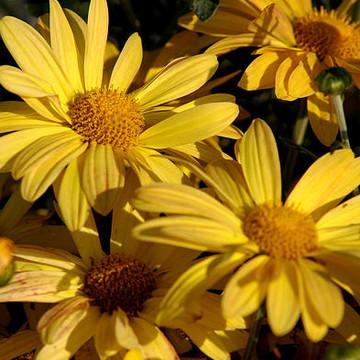 Mi Wild Flowers Collection