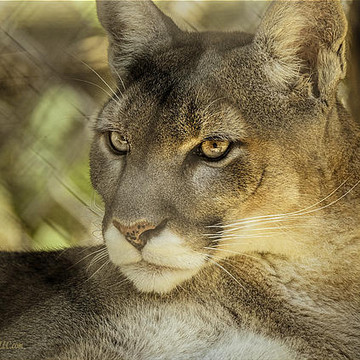 Mi Wilderness Trails Animal Zoo Collection