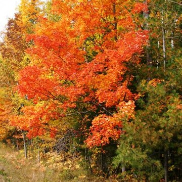Michigan Fall Collection