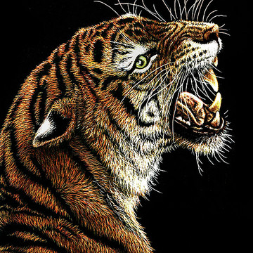 Miniature Scratchboard Art - ACEO Collection