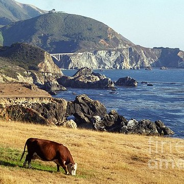 Monterey County Collection