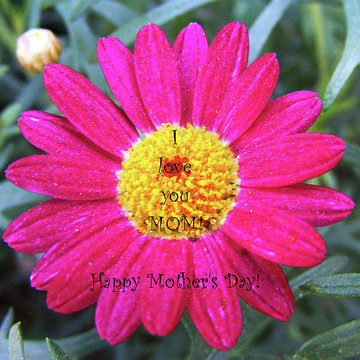 Mother Day Cards For Sale Collection