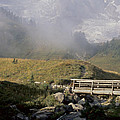 Mount Rainier Collection