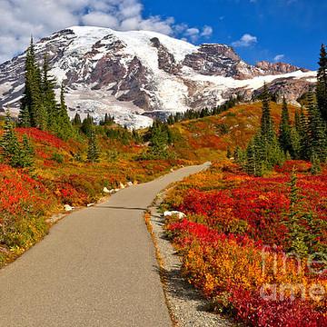 Mt Rainier National Park Collection