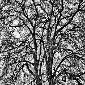 Naked Trees Collection