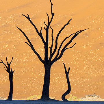 Namibia Collection