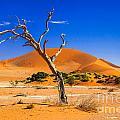 Namibia Desert Collection