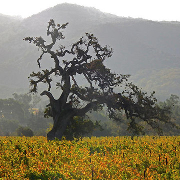 Napa Valley - Photography Collection