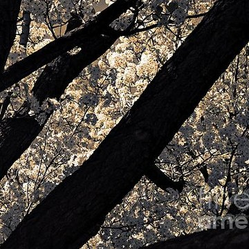Natural Abstracts Collection