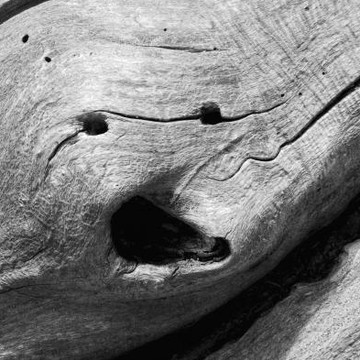 Natural Wood Sculpture Collection