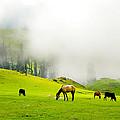 Nature - Landscapes Collection