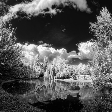 Nature Photography Black and White Collection