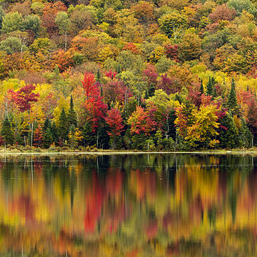 New England Fall Foliage Collection