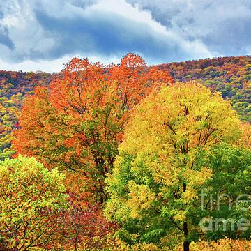 New York Autumn Collection