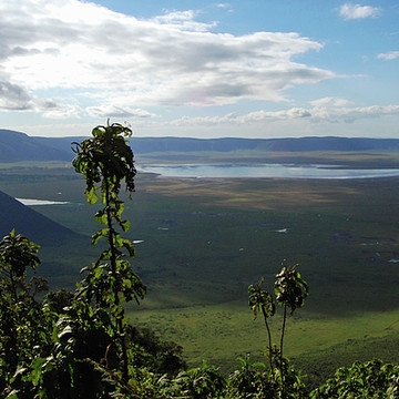 Ngorongoro Conservation Area Collection