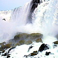Niagara Falls Collection