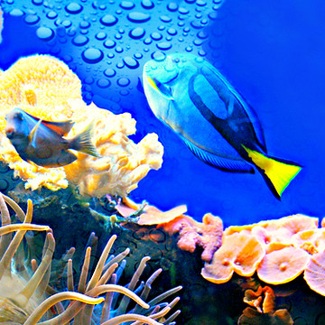 Norwalk CT Maritime Aquarium Collection