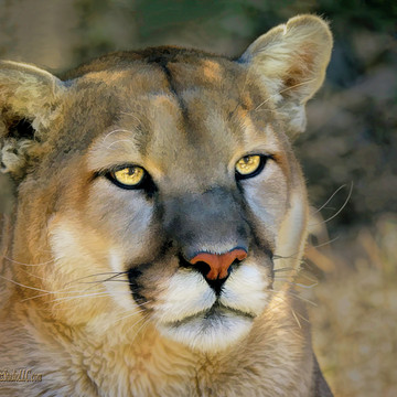 NV Animal Ark Reno Nevada Collection