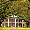 Oaks and Plantations Collection