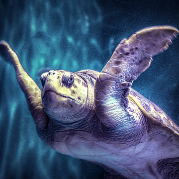 Ocean Life Collection